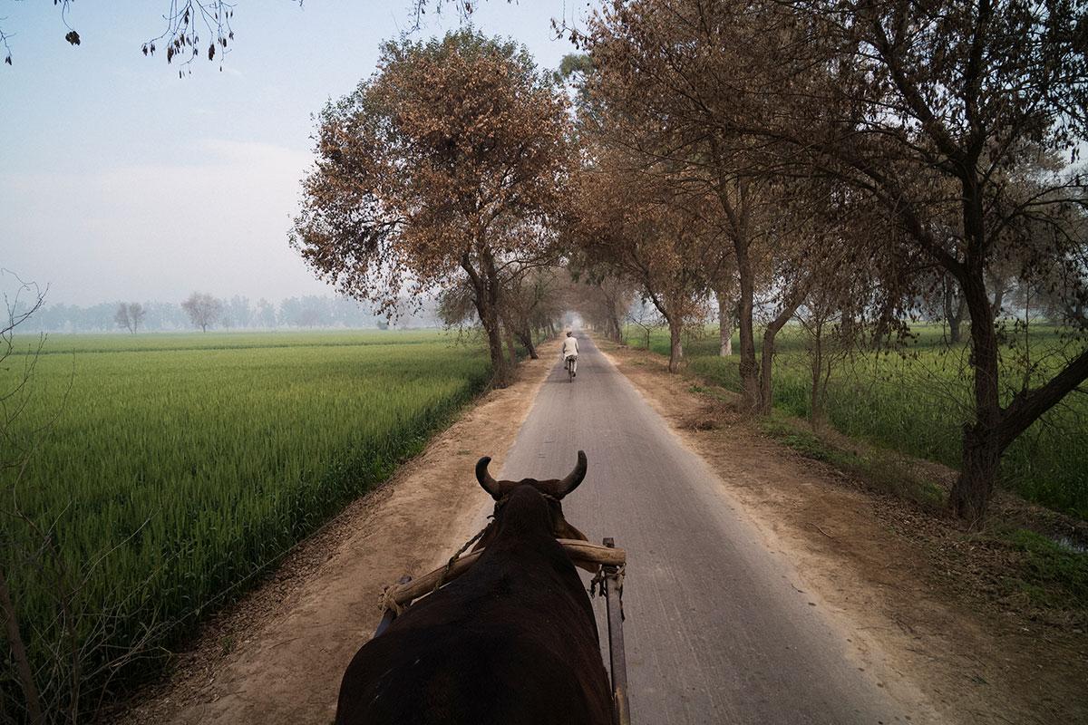 India, Punjab, 2019