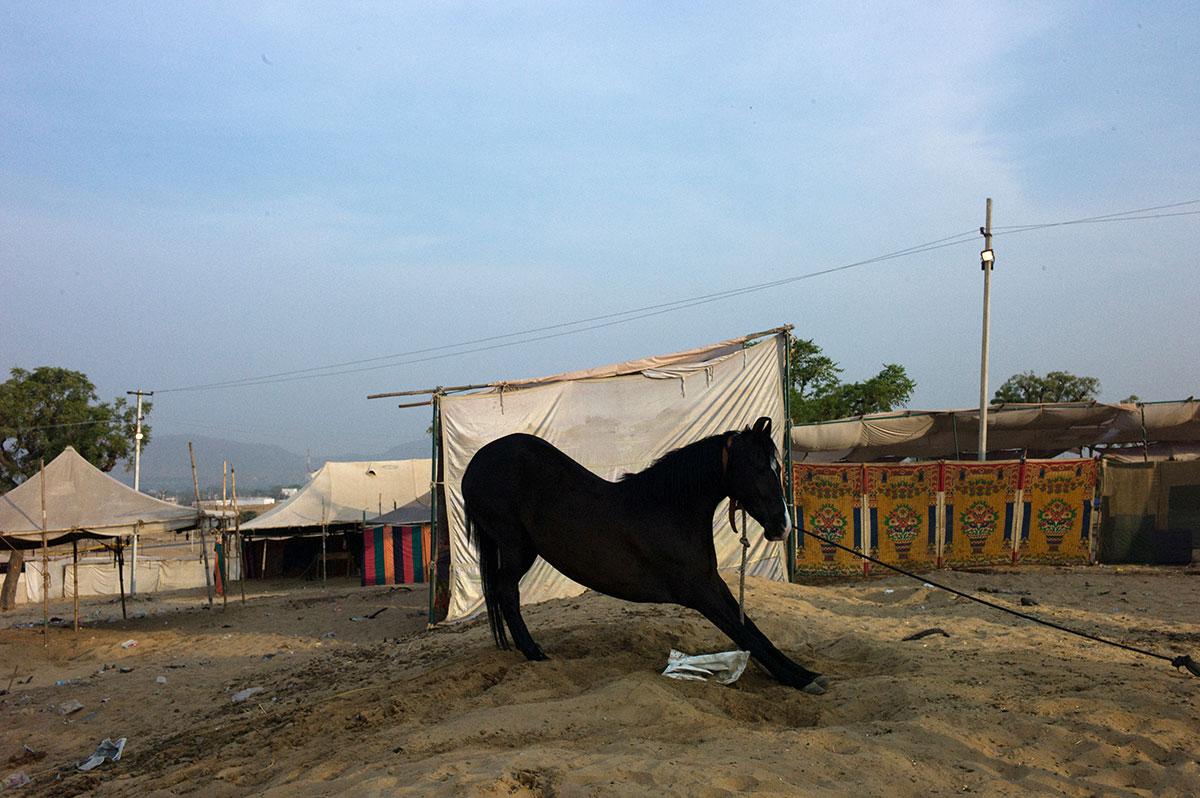 India, Rajasthan, 2015